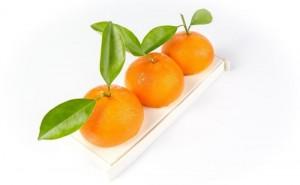 buche-de-noel-mandarine-karamel