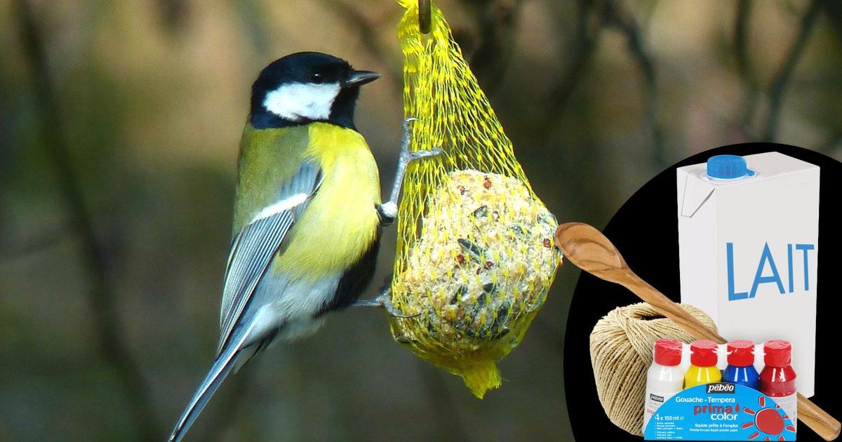 mangeoire-oiseau-wiplii